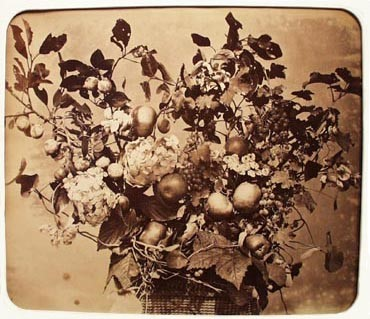 Untitled Still Life (Flowers & Fruit)