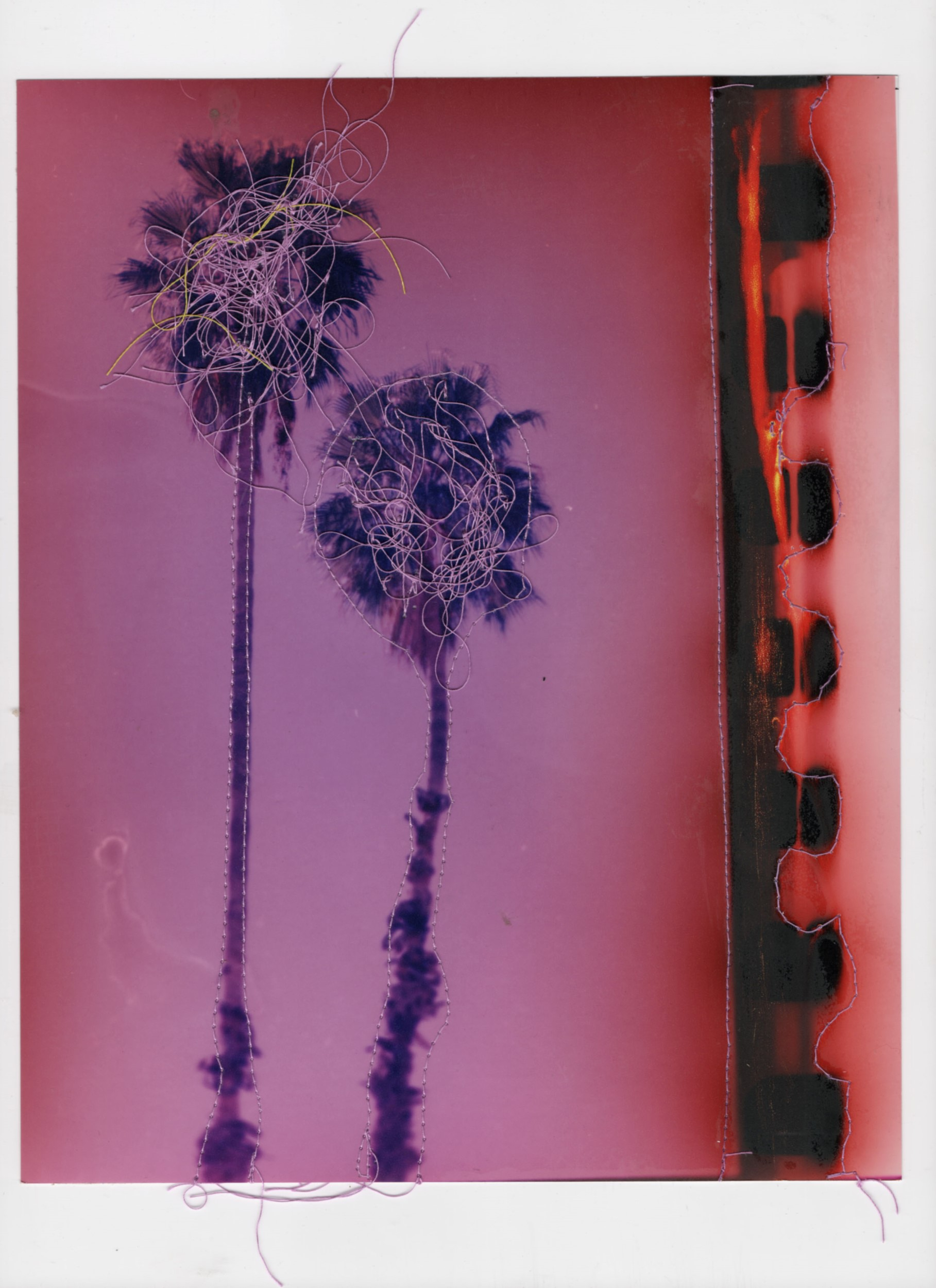 Palm Trees #1 (Purple)