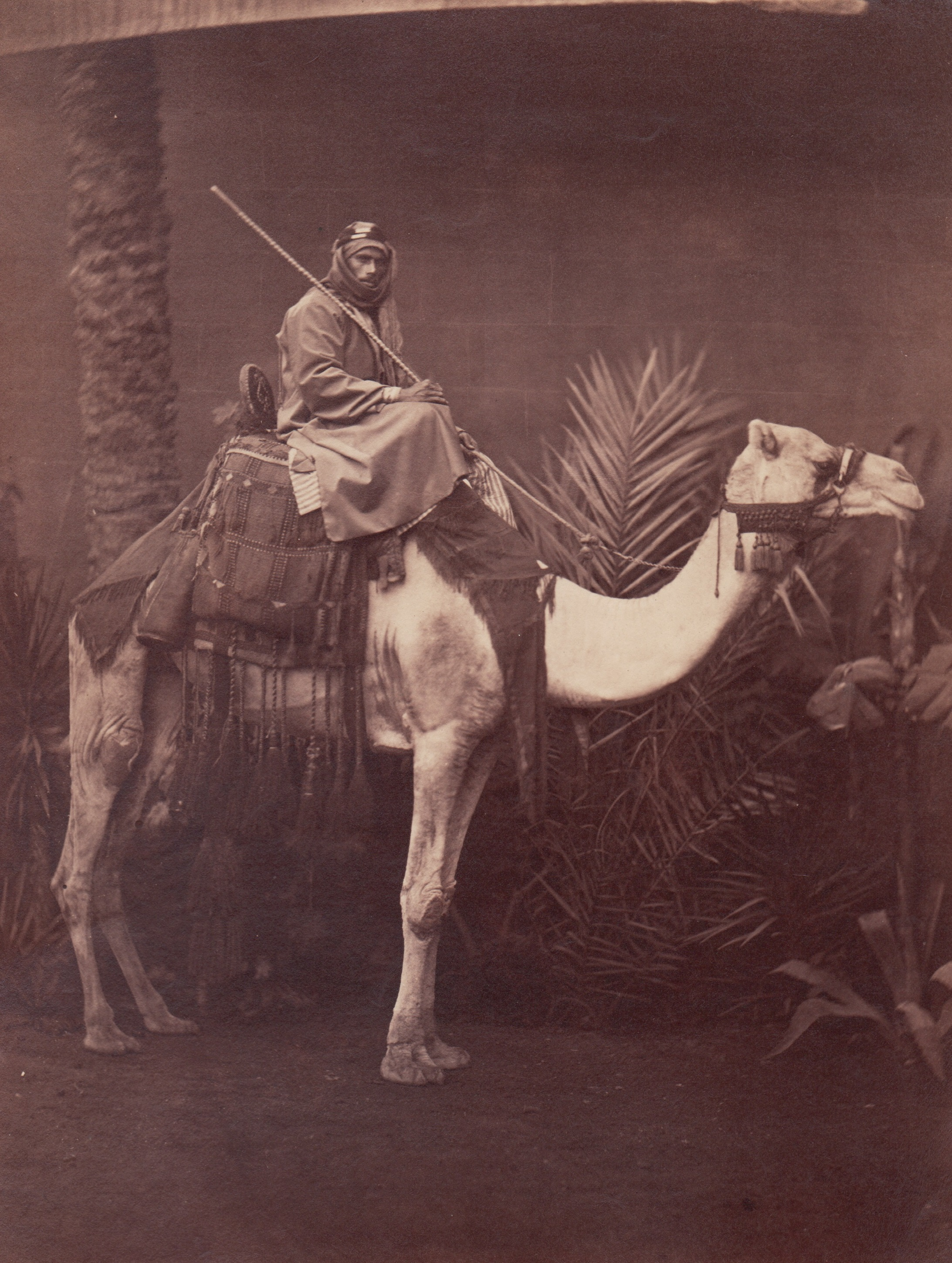 Man on Camel in Studio