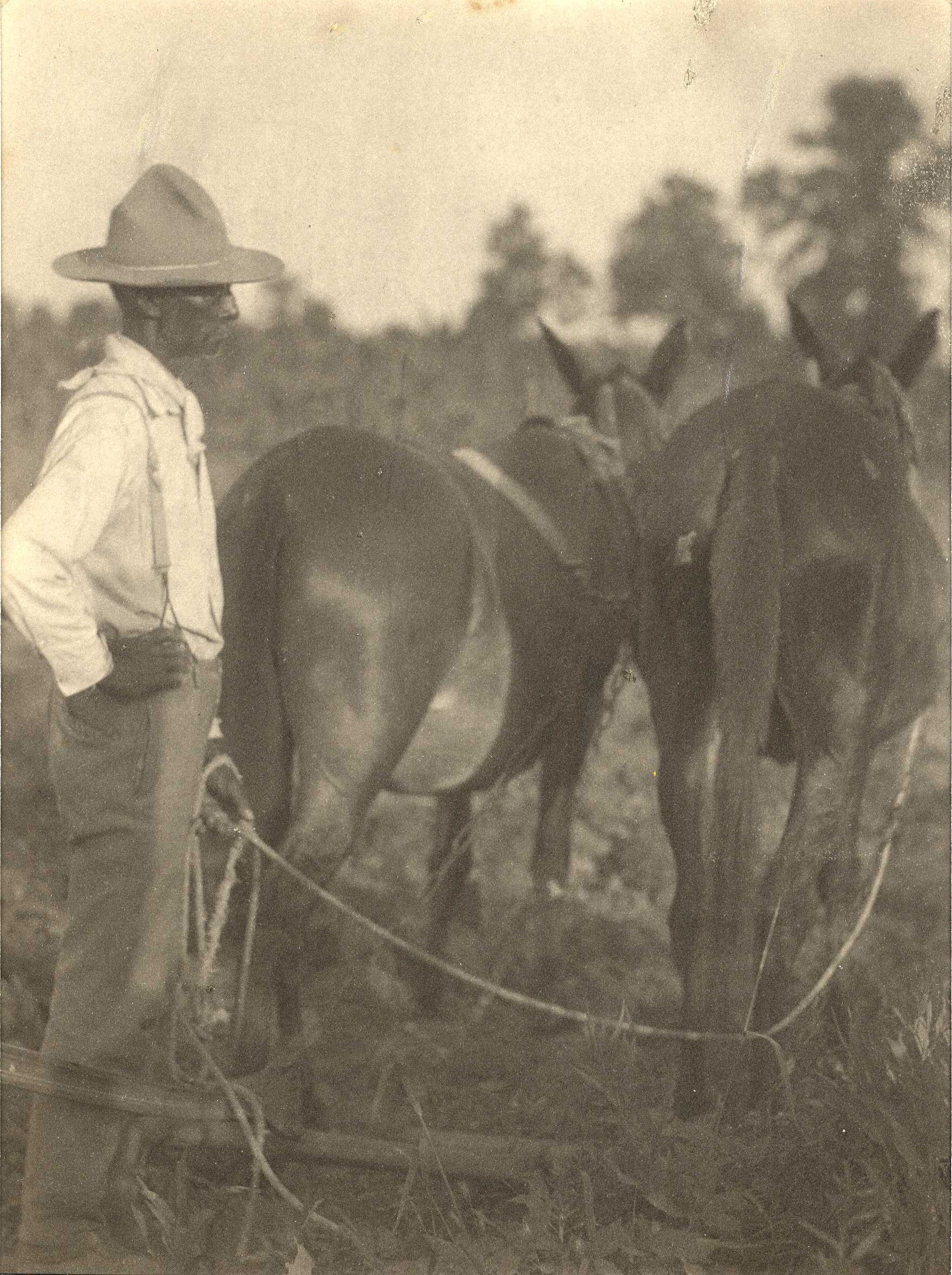 Field worker with two mules, c. 1915